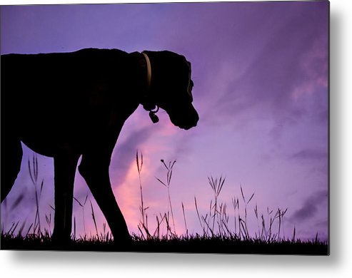 Dog Metal Print featuring the photograph The Watcher by Guillermo Cummmings