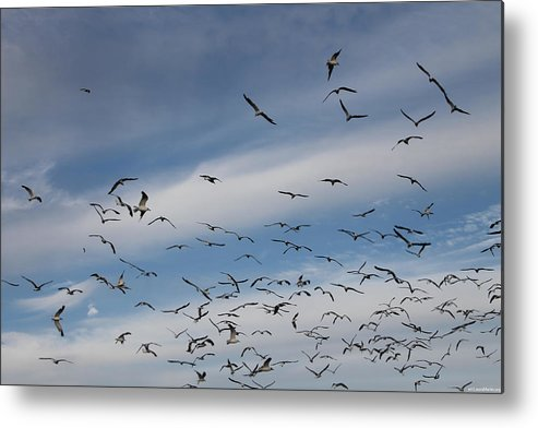 Seagull Metal Print featuring the photograph They're Massing by Laura Martin
