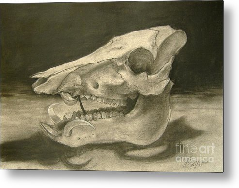 Pig Skull Metal Print featuring the drawing This Little Piggy by Julianna Ziegler