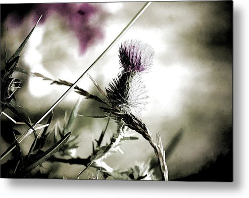 Thistle Metal Print featuring the photograph Thistle by Bonnie Bruno