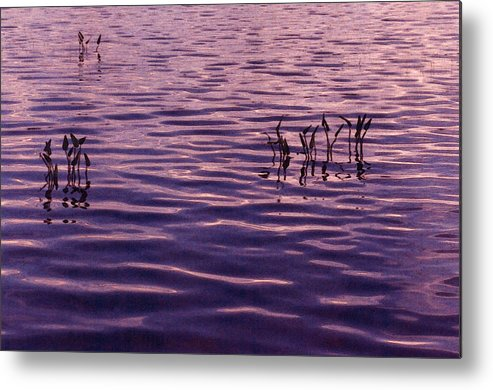 Sunset Metal Print featuring the photograph Three Plants by Lyle Crump
