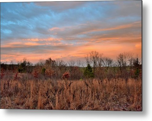 Trees Metal Print featuring the photograph Todays Art 2473 by Lawrence Hess