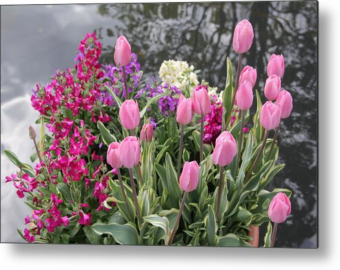 Pink Tulips Metal Print featuring the photograph Top View Planter by Allen Nice-Webb