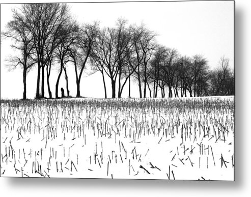 Winter Metal Print featuring the photograph Touch Of Winter Blk N Wht by Chuck Kuhn