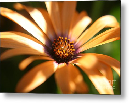 Sun Metal Print featuring the photograph Touched By The Sun by Amy Holmes