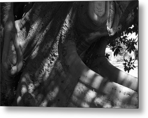Tree Metal Print featuring the photograph Tough Hide... by Gerry McAteer