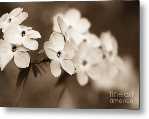 Purple Metal Print featuring the photograph Trail Of Flowers by Irene Abdou