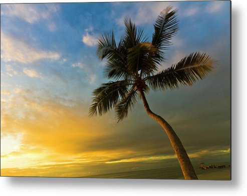 Florida Key West Metal Print featuring the photograph Tree Against Sky by Jerril Mathew