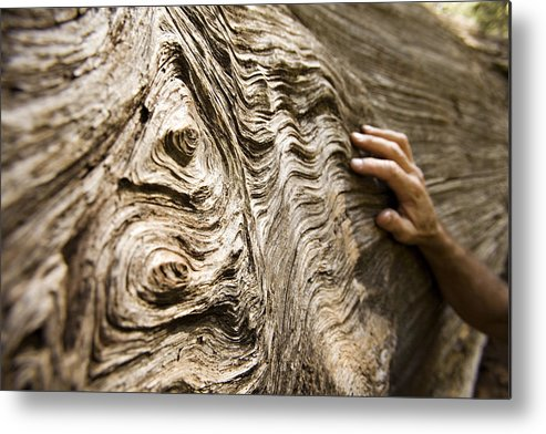 Tree Metal Print featuring the photograph Tree Bark And Hand by Dawn Kish