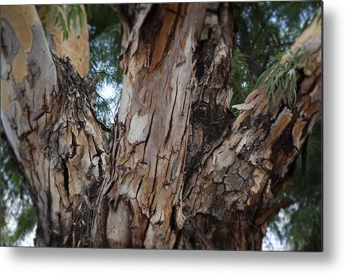 Tree Branches Metal Print featuring the photograph Tree Branch Texture 3 by Kelley King