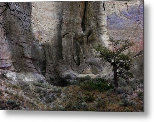 Fantasy Metal Print featuring the photograph Tree by Ed Hall