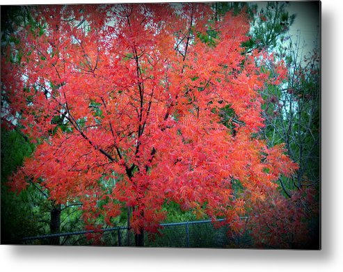 Tree Metal Print featuring the photograph Tree On Fire by AJ Schibig