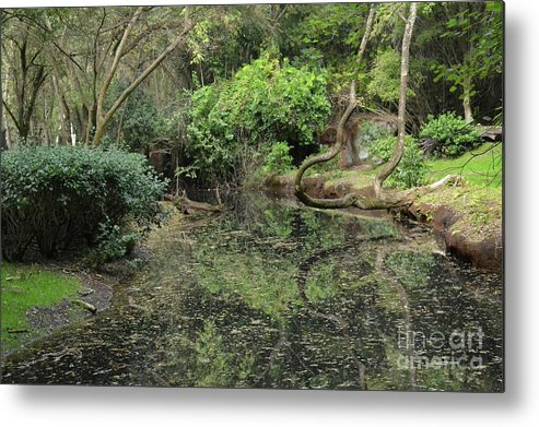 Pond Metal Print featuring the photograph Trees And Water by Carol Bradley