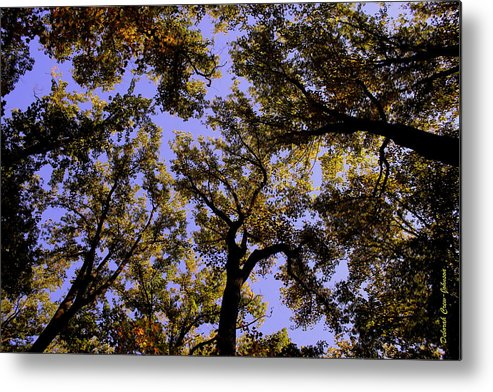Trees Metal Print featuring the photograph Trees Conversing by Deborah Crew-Johnson