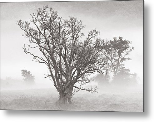 Tree Metal Print featuring the photograph Trees In Mist- St Lucia by Chester Williams