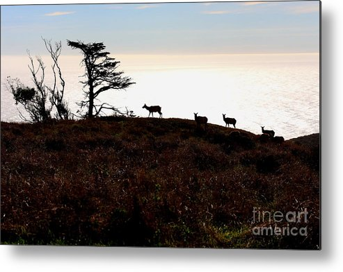 Tule Elk Metal Print featuring the photograph Tule Elks Of Tomales Bay by Wingsdomain Art and Photography