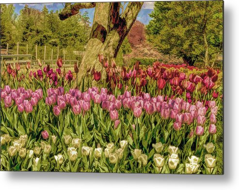Recent Metal Print featuring the photograph Tulip Bed At Longwood Gardens In Pa by Geraldine Scull