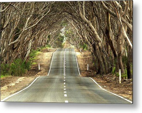 Road Metal Print featuring the photograph Tunnel Of Trees by Catherine Reading