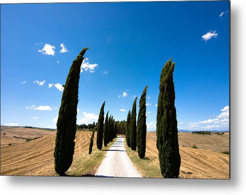 Tuscany Metal Print featuring the photograph Tuscan Cypress Landscape by Mathew Lodge