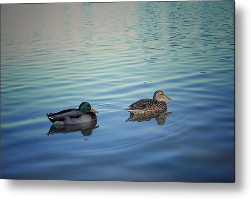 Ducks Metal Print featuring the photograph Two Ducks Strolling No Edit by Michaela Born