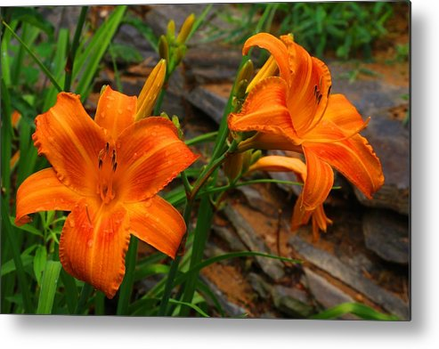 Daylilies Metal Print featuring the photograph Two Orange Daylilies by Kathryn Meyer