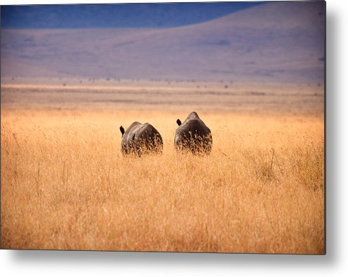 3scape Photos Metal Print featuring the photograph Two Rhino's by Adam Romanowicz
