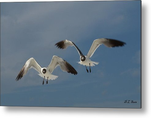 Seagulls Metal Print featuring the photograph Two Seagulls by Dennis Stein