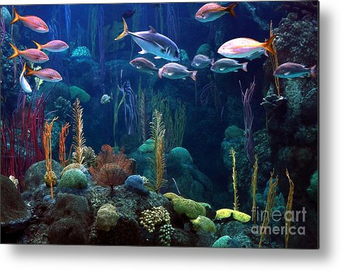 Fish Metal Print featuring the photograph Under The Sea 3 by Randy Matthews
