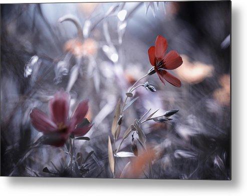 Flower Metal Print featuring the photograph Une Fleur, Une Histoire by Fabien Bravin