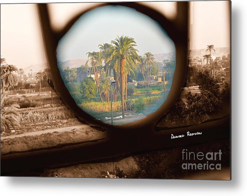 View .. Plant .. Trees .. Palms Metal Print featuring the photograph View by Ahmed Radwan