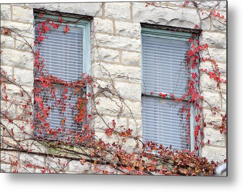 Architectural Metal Print featuring the photograph Vines In Fall by Jan Amiss Photography