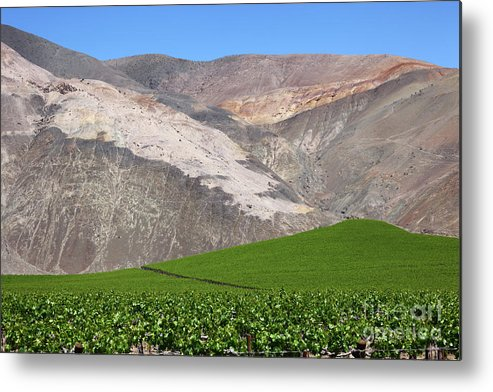 Chile Metal Print featuring the photograph Vineyards In The Atacama Desert Chile by James Brunker