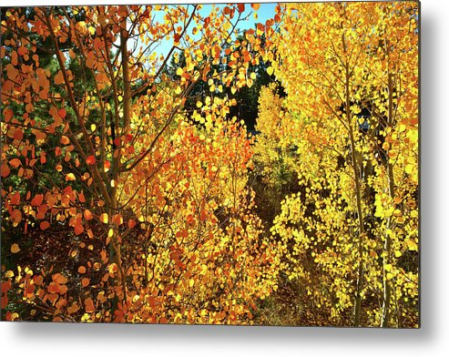 Colorado Metal Print featuring the photograph Walking Among The Aspens At Dillon Reservoir by Ray Mathis