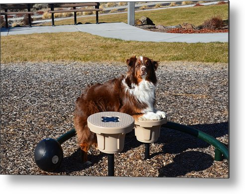 Hank Metal Print featuring the photograph Want To Play by Linda Larson