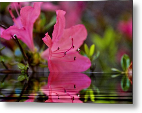 Water Metal Print featuring the digital art Water Azalea by Ches Black