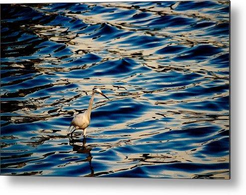 Water Bird Series Metal Print featuring the photograph Water Bird Series 11 by Stephen Poffenberger