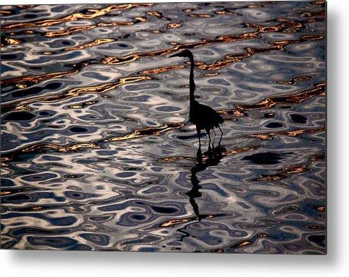 Water Bird Series Metal Print featuring the photograph Water Bird Series 17 by Stephen Poffenberger