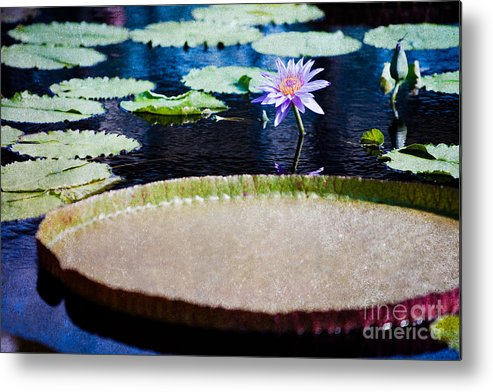 Flower Metal Print featuring the photograph Water Lily - Water-platter Textured by Irene Abdou