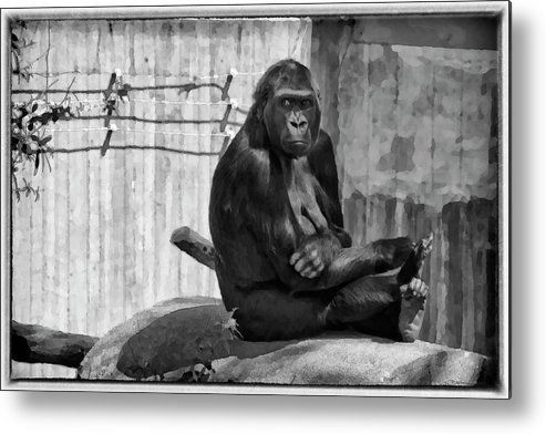 Africa Metal Print featuring the photograph Watercolor Gorilla by Joan Carroll