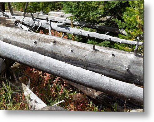 Tree Metal Print featuring the photograph Weathered Trees Fallen Down Within Yellowstone National Park by Thomas Baker