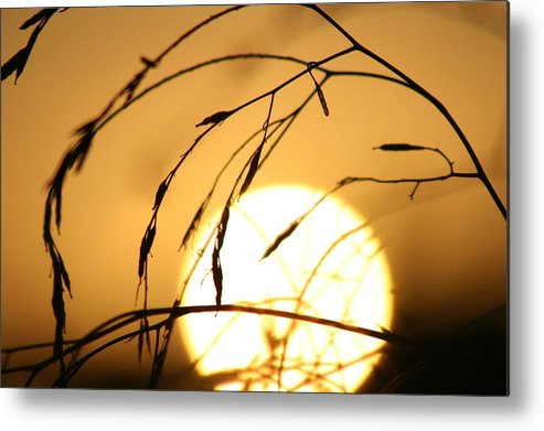 Sun Metal Print featuring the photograph Weeds In The Sun by Kerry Reed
