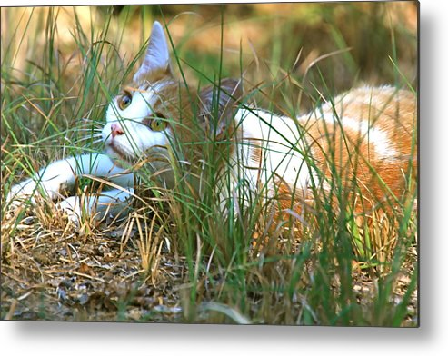 Cat Metal Print featuring the photograph Whats Up by Danny Black