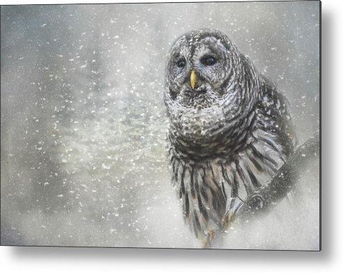 Jai Johnson Metal Print featuring the photograph When Winter Calls Owl Art by Jai Johnson