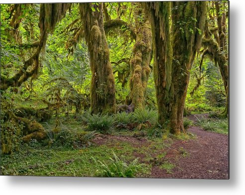 Olympic National Park Metal Print featuring the photograph Where The Leprechauns Roam by Philip Kuntz