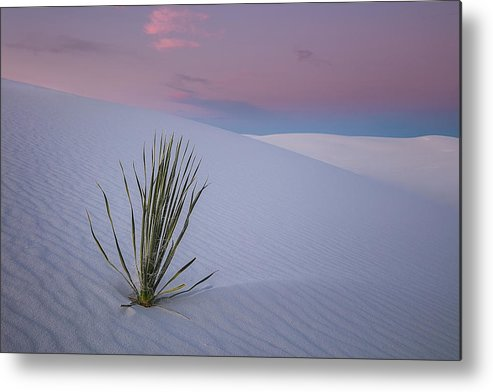 White Metal Print featuring the photograph White Dunes by Edgars Erglis