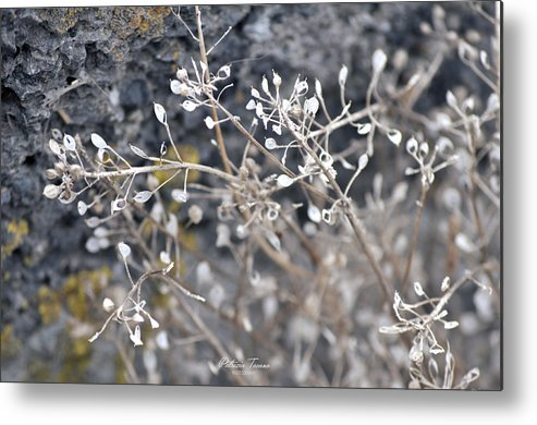 White Metal Print featuring the photograph White Irish Flower by Patrizia Tavano