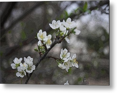 Flowers Metal Print featuring the photograph White Simplicity by Janey Loree