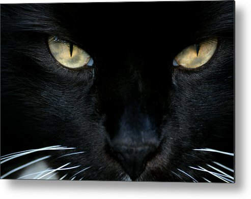 Cat Metal Print featuring the photograph White Whiskers by Lorenzo Cassina
