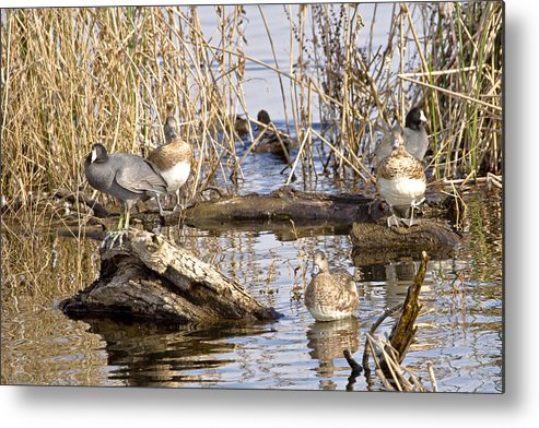 Nature Metal Print featuring the photograph Who Is Watching Whom by Charlie Osborn