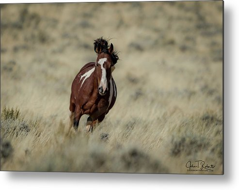 Wild Metal Print featuring the photograph Wild And Free by Clicking With Nature